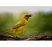 Hellow  Yellow Photographic Print