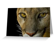 Cougar stare redux Greeting Card