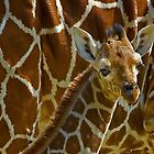 Giraffe redux by Mundy Hackett