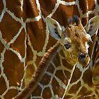 Giraffe redux by Mundy Hackett