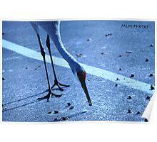 Wildlife (1) Poster