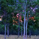 Sunset in the bush by Mark Batten-O'Donohoe