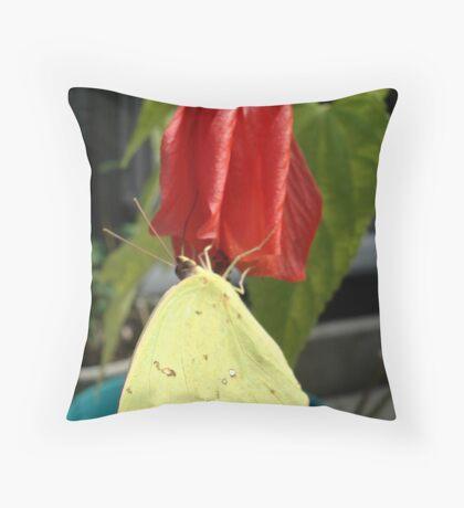 SULPHUR ON LATE HIBISCUS Throw Pillow