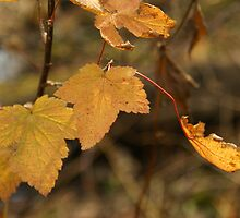 The color of the leaves by sternbergimages