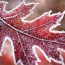 Fall Frost by Beth Mason