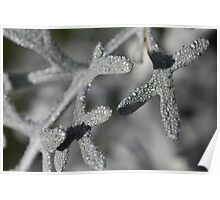 Frost on Dusty Miller #1 Poster