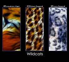Wildcats by Mundy Hackett