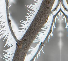 Ice Thorns by MightyRain