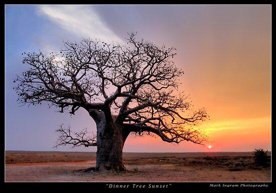 Dinner Tree Sunset by Mark Ingram