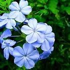 """Pale Blue Autumn"" by Anthony Cherubino"