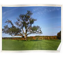Autumn: The Tree at Topsmead Poster