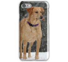 Lab in the Snow iPhone Case/Skin