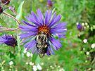 Bee Hug by MotherNature