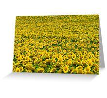 thousands of sunflowers on a sunbath Greeting Card