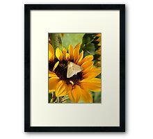 Moth and Sunflower Buffet  Framed Print