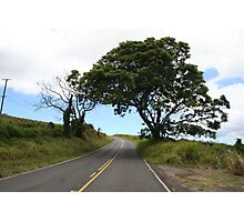 LONE UPCOUNTRY TREE Photographic Print