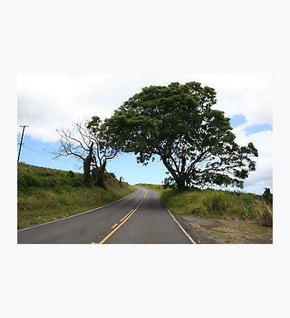 LONE UPCOUNTRY TREE Photographic Print