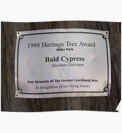 Bald Cypress 7 Poster