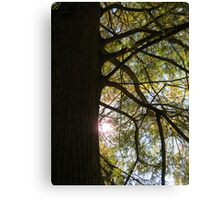 Bald Cypress 9 Canvas Print