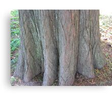 Bald Cypress 11 Canvas Print