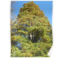 Bald Cypress 12 Poster