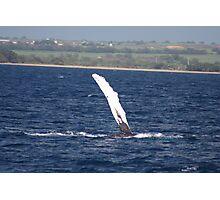 Humpback Whale Pec Underside Photographic Print