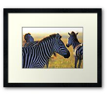 Zebras at Sunrise Framed Print