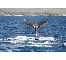 Extended Fluke Up Dive - Humpback Whale Photographic Print
