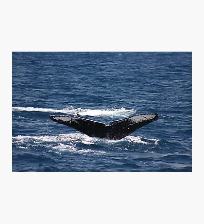 Fluke Up Dive - Humpback Whale Photographic Print