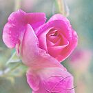Romantic rose in a mist with love by Celeste Mookherjee