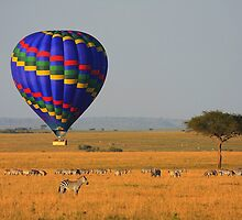 Hot Air Balloon Over the African Plains by Jill Fisher