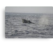 Humpback Whale Inflated Head Lunge Canvas Print