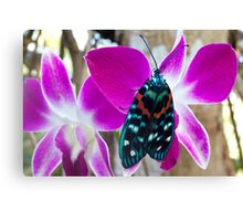 Butterfly on orchid, Thailand Canvas Print