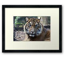 The wild beast. Framed Print
