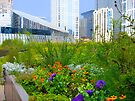 Chicago City Hall Rooftop Garden by Polly Greathouse
