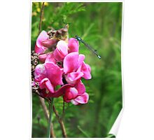 The Damselfly and the Sweet Pea Poster