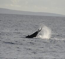 Humpback Whale Tail Slap by Katie Grove-Velasquez