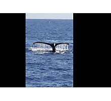 Humpback Whale Fluke Up Dive Photographic Print