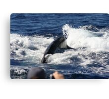 Friendly Humpback Whale Canvas Print