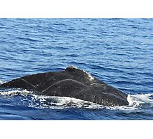 Male Humpback Scars Photographic Print
