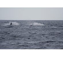 Humpback Twin Breach #3 of 4 Photographic Print