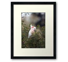 Pink Cockatoo Framed Print