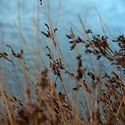 Reeds in the shallows by Janine Livingston