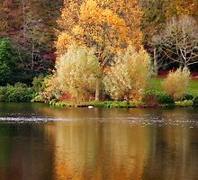 Autumn Glory by Peter Vines