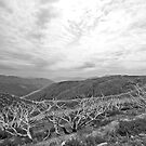Falls Creek 1 - Black and White by pennyswork