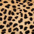 Cheetah hide - middle pattern by KRDesign