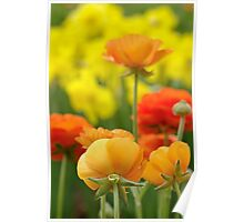 bright tulips Poster