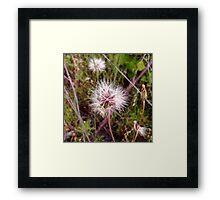 Dandelion in the Spring Framed Print
