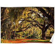 Old Southern Plantation Oaks Poster