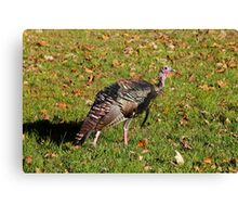 Tom T. Turkey Canvas Print